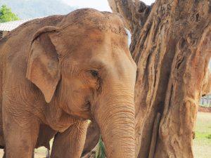 éléphant sanctuaire thaïlande