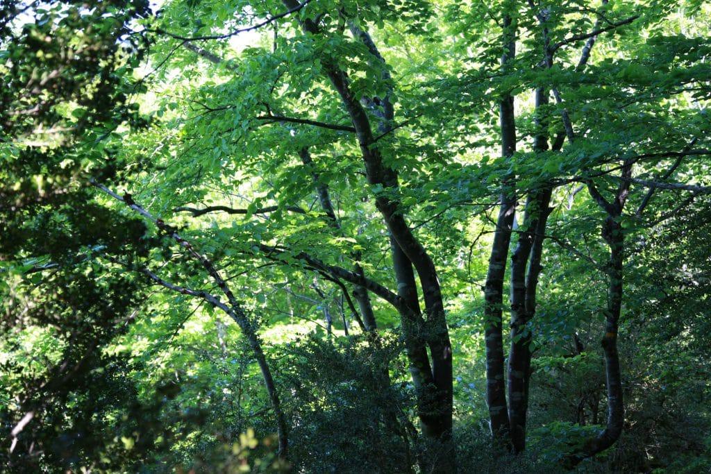 Forêt autour de Roquefixade