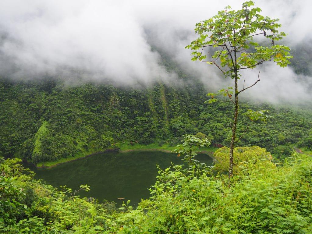 Végétation luxuriante à Tahiti.