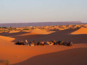 Désert marocain en famille