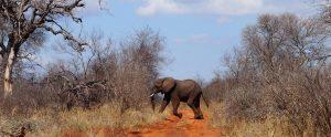 écovolontariat afrique du sud