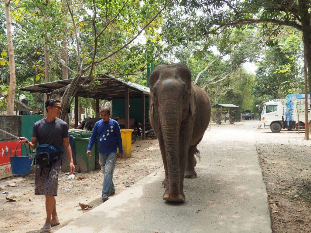 WFFT en Thaïlande