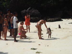 plage singes Thaïlande